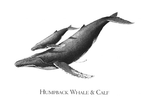 how to draw whales book