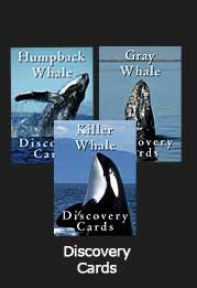 Discovery Cards